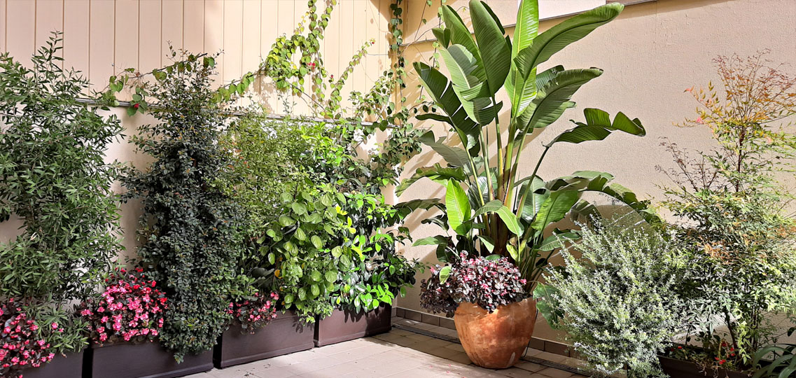 Pati interior amb jardineres